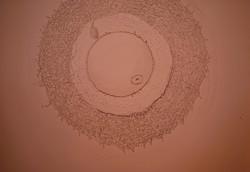 044-acqua-embrione-eva,vivente-02.jpg
