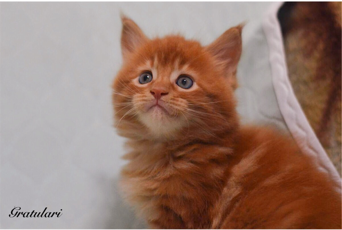 котенок менй кун