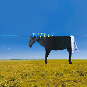 horse_small.jpg