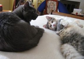 AA & Smokey on bed.jpg