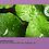 מסיכת חימר וחצילים להלבנה ניקוי עמוק ולחות  | VENZEN | גילמור ביוטי