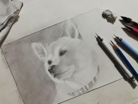 芝犬のRちゃん