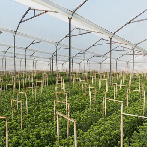 Guasca Farm