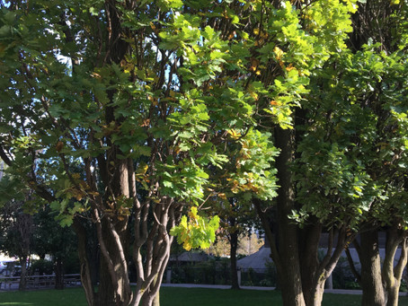 Improving Protection For Our Trees