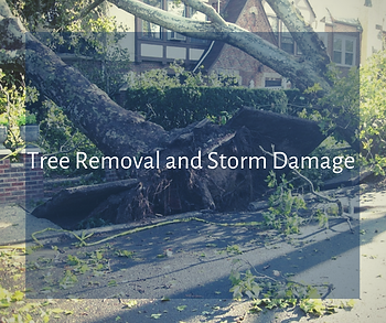 Tree Removal and Storm Damage Services