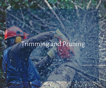Trimming and Pruning Services