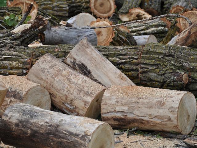 tree-1832656_1920.jpg