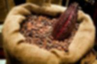 cacao2.jpg