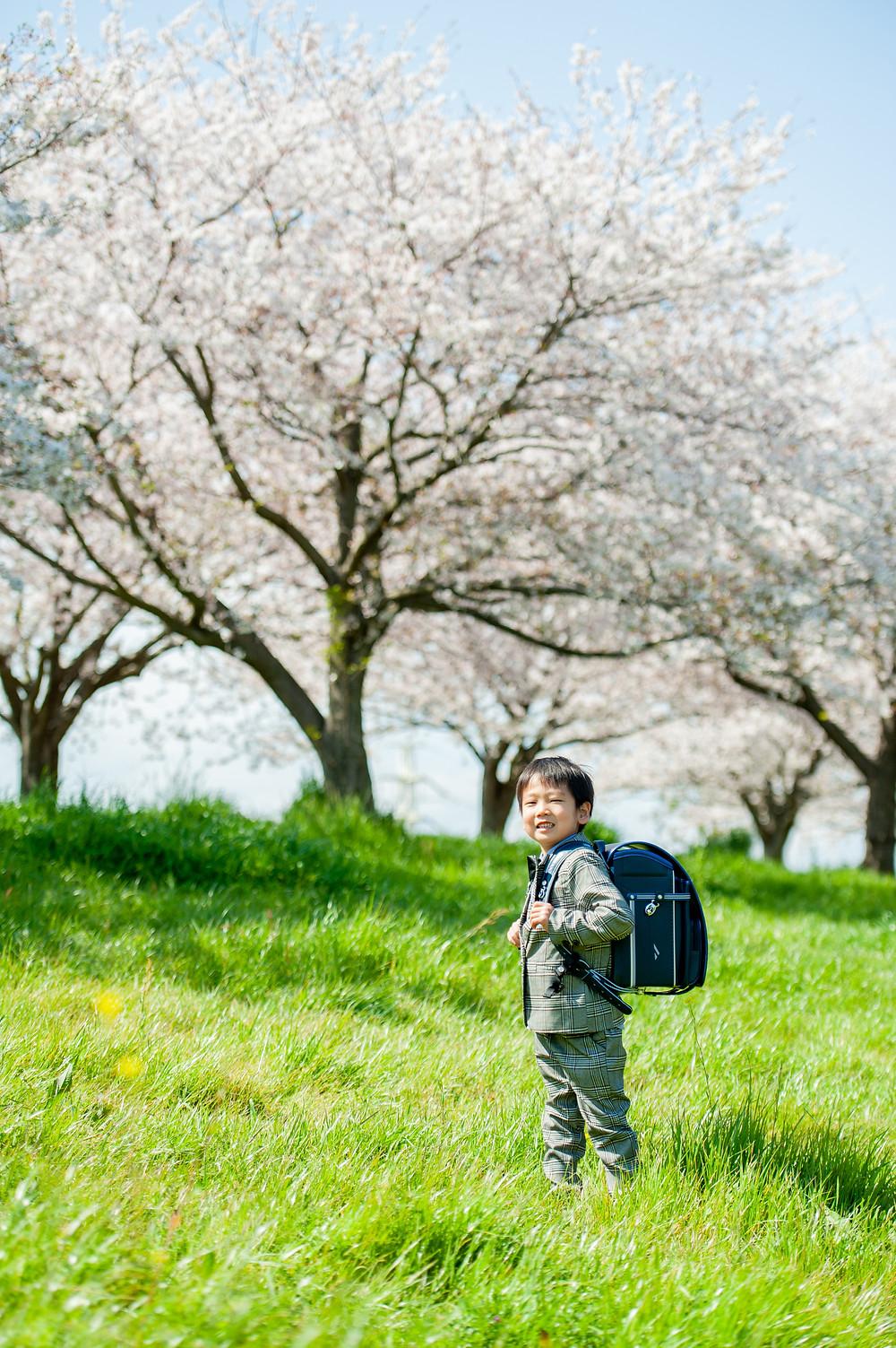 桜の咲く公園でポーズする男の子