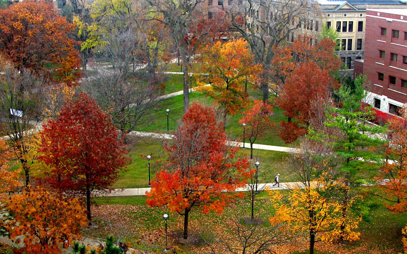 University of Michigan's Diag in the Fall