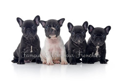 Squishy's puppies