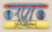 Arterialized Neurovenous Flap
