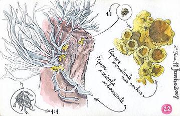 Lichens, Berlenga Island