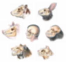 Dentition, Skull, Comparison