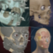 science illustration, scientific illustration, forensic art, facial approximation, reconstruction, Luis Lopes Skeletal Collection