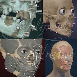 ilustração científica, arte forense, aproximação facial, reconstrução facial, coleção osteológica luis lopes
