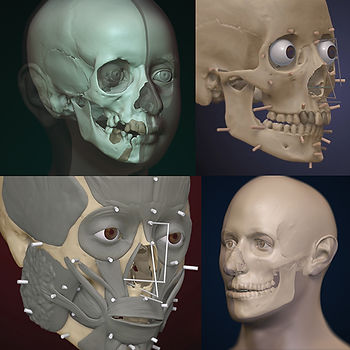 Luis Lopes Skeletal Collection.jpg