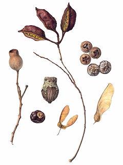 Seeds, Pods