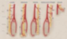Blood Supply Nerves