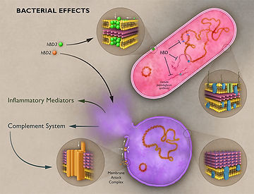 Antimicrobial Peptides