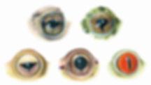 Amphibian, Pupil