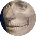 facial reconstruction, hard tissue, bone, soft tissue, forensic art, facial approximation