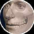 reconstrucao facial, aproximacao facial, osso, tecidos moles, arte forense