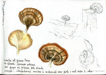 Fungi, Amazonia