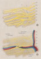 Brachial Plexus Morphology and Vascular Supply Wistar Rat