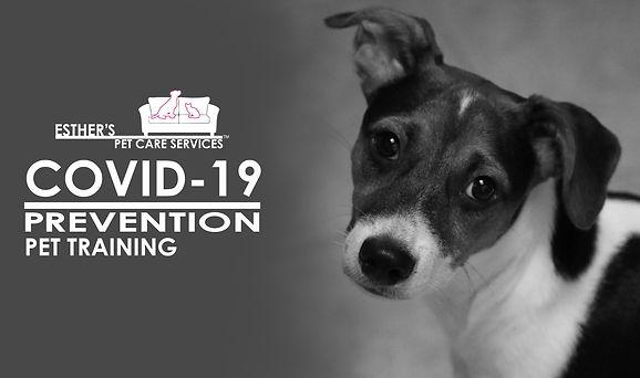 COVID-19 PREVENTION PET TRAINING WEBSITE