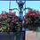 hanging baskets for public plantings