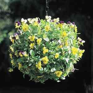 wire hanging globe planters