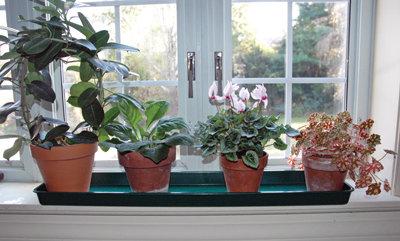 windowsill trays