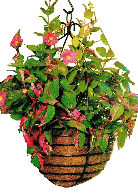 decorative wrought iron hanging flower basket