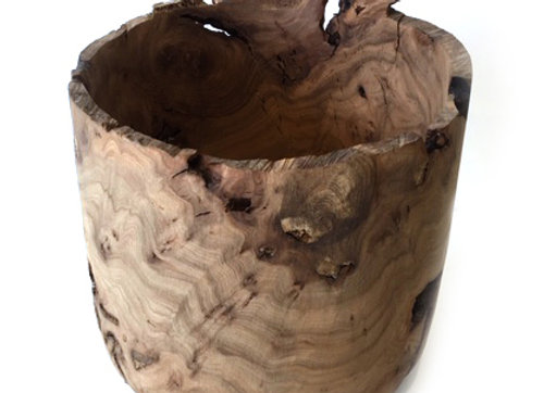 Scottish Burr Elm