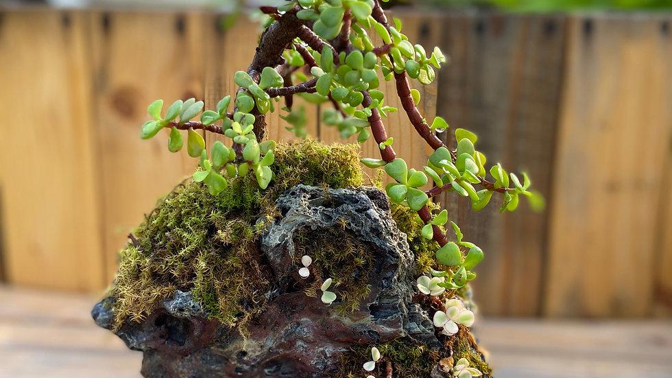 Jade on a rock