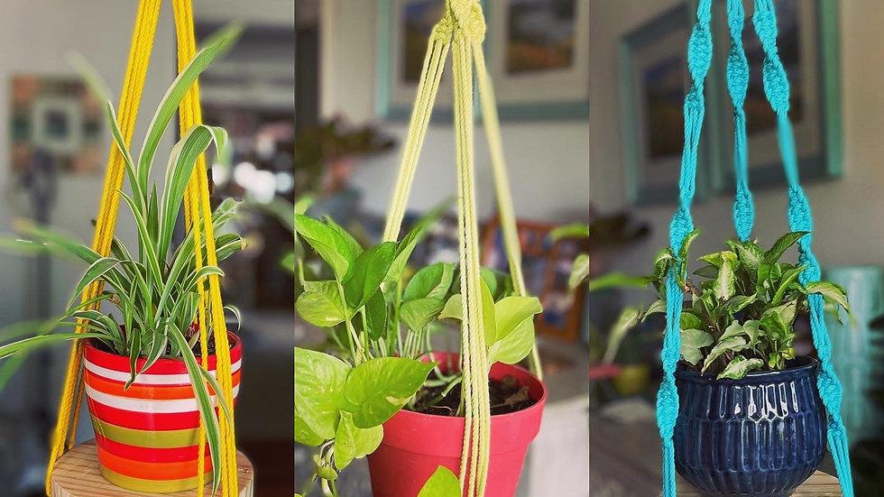 Macrame plant hanger single