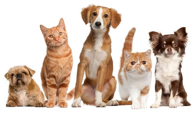 pet-animais.jpg