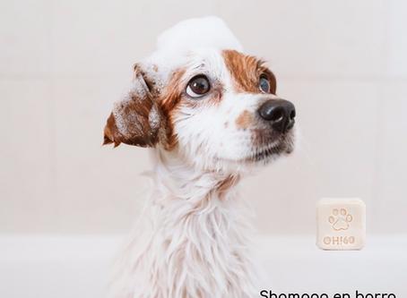 El shampoo en barra para tu perrito