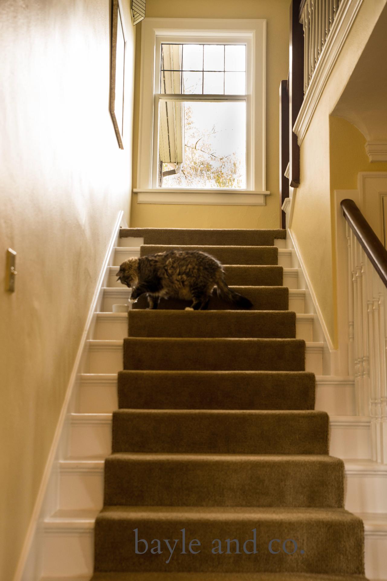 Mt. Baker stairway