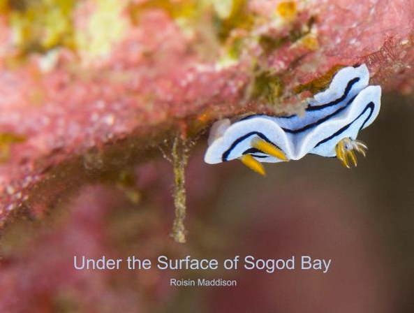 Under The Surface Of Sogod Bay