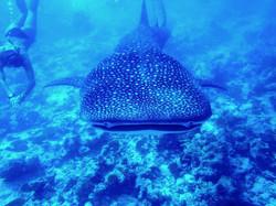 подводный мир ко чанг
