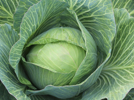 Typisch (Nieder-)Österreich – Krautsalat kalt / warm und Kümmel