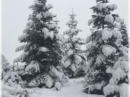 Leise rieselt der Schnee…