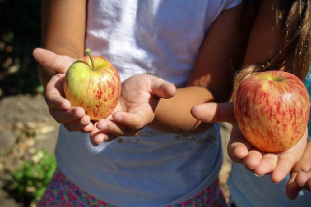 apple-1572648_1920