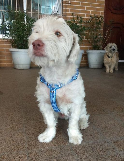 Kit - Peitoral para Cães de Médio Porte + Guia de 2 metros