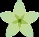 פרחAsset 3.png