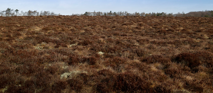 Peat extraction: a test of Scotland's commitment to climate targets?