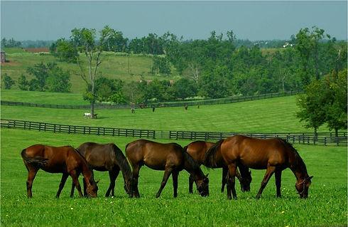 Pasture Perfect.jpg