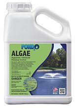 Algae Gal.jpg
